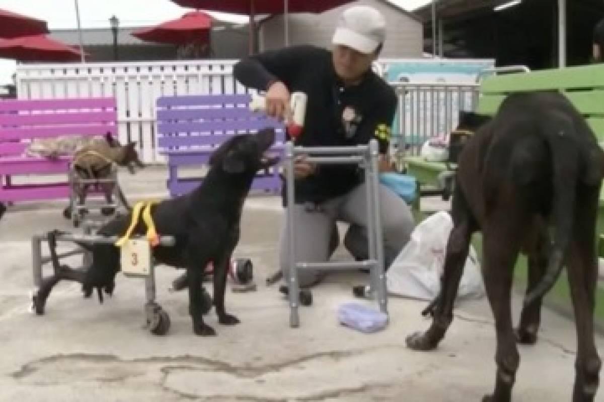 Taiwan s hace sillas de ruedas para perros con tuber as for Sillas para perros