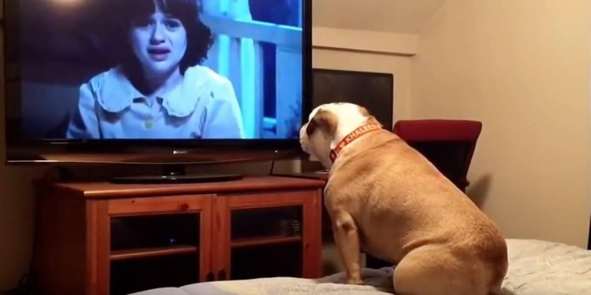 Perro reacciona al ver una película de terror