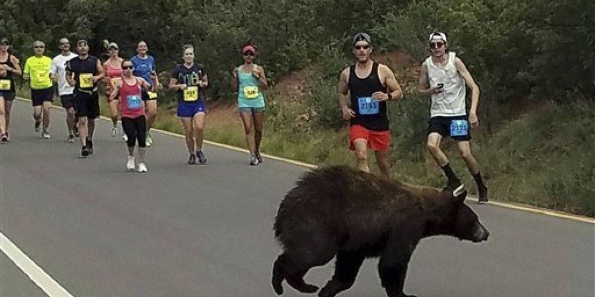 Oso se atravesó en una carrera en Colorado