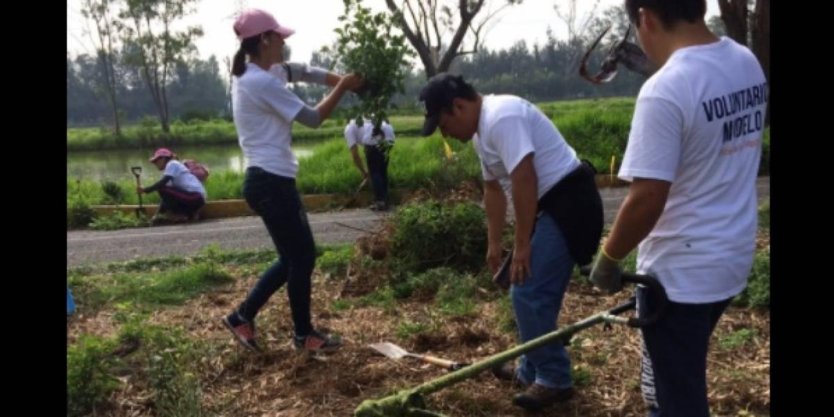 Grupo Modelo planta 120 mil árboles en todo el país