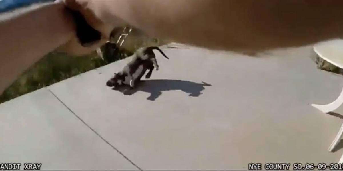 El polémico caso de maltrato animal que involucra a la policía y remece a Estados Unidos