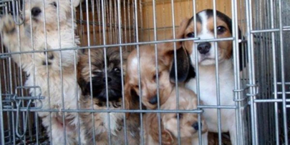 Policía capitalina atiende casi dos mil denuncias relacionadas con animales