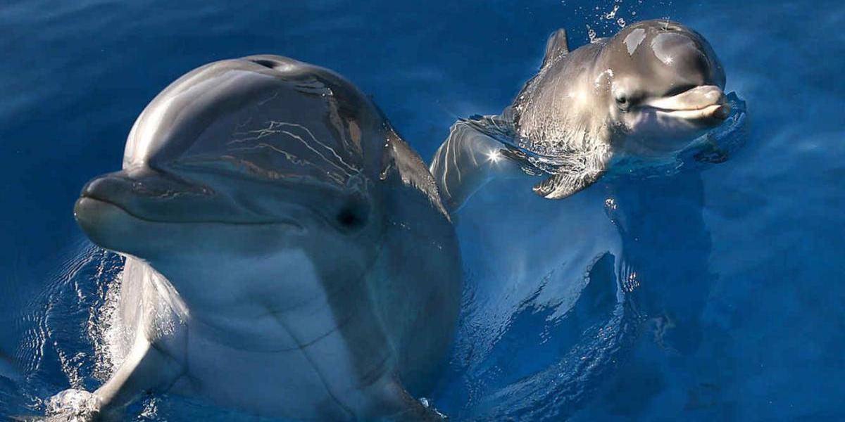 Revelan escabrosos detalles del experimento que drogaba con LSD a delfines para enseñarles a hablar