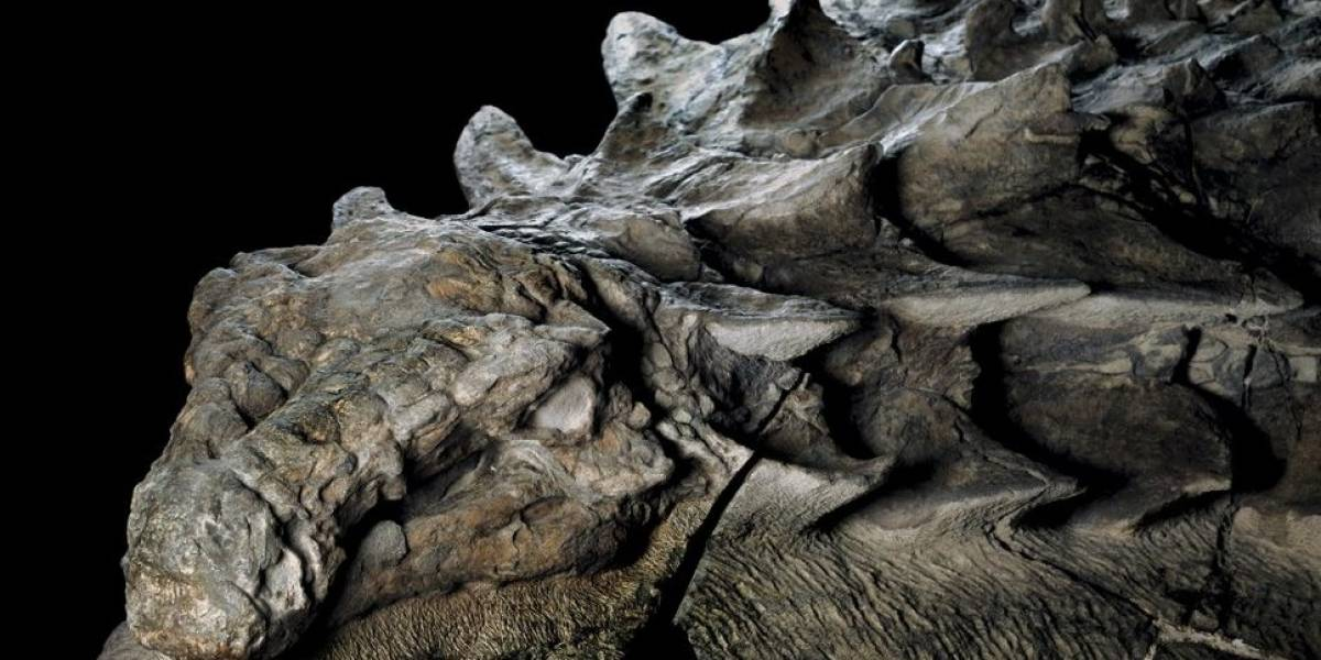 Descubren fósil de dinosaurio de 110 millones de años