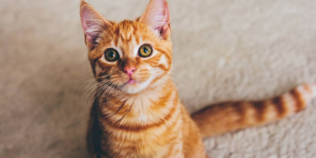 La Policía británica busca al autor de muerte de 400 gatos y otros mamíferos