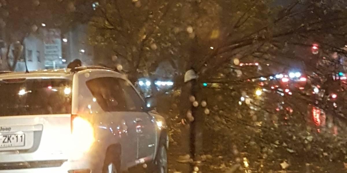 Sistema frontal: árbol cayó sobre varios autos en La Reina