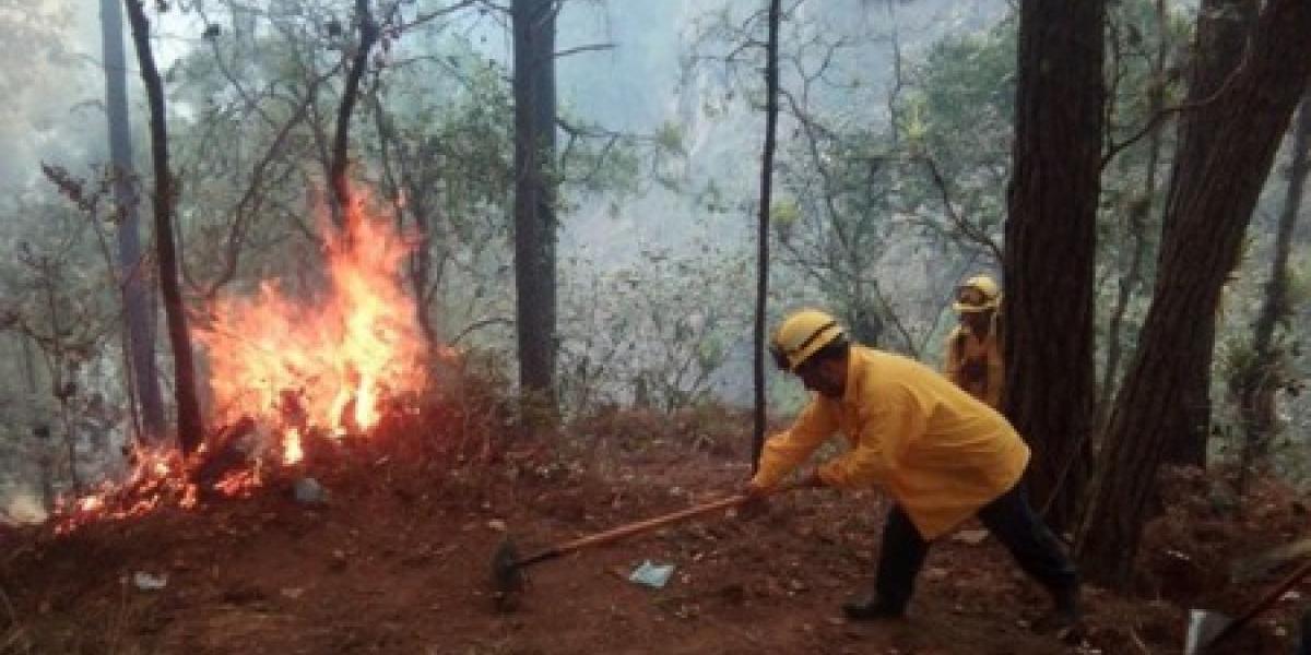Concesiones forestales a comunidades en Petén son clave para evitar incendios, según estudio
