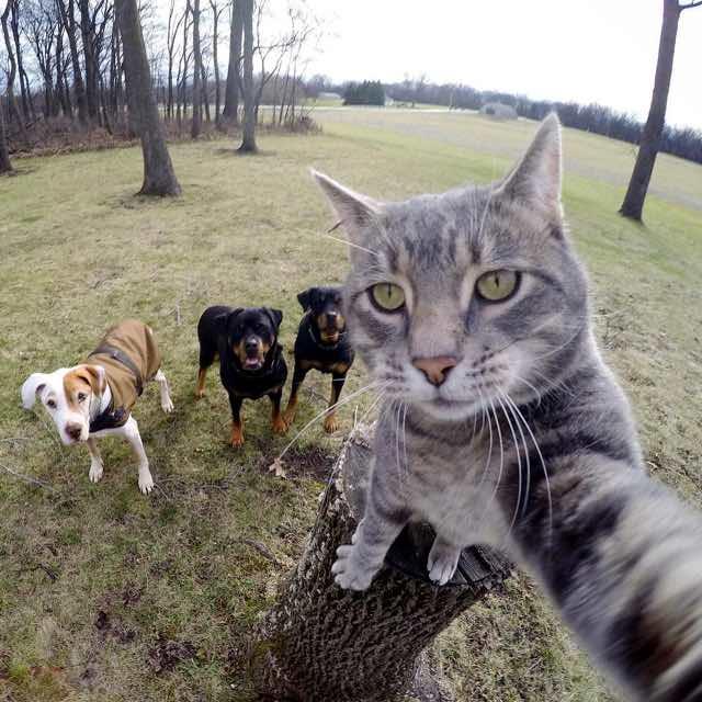 Manny y sus amigos.