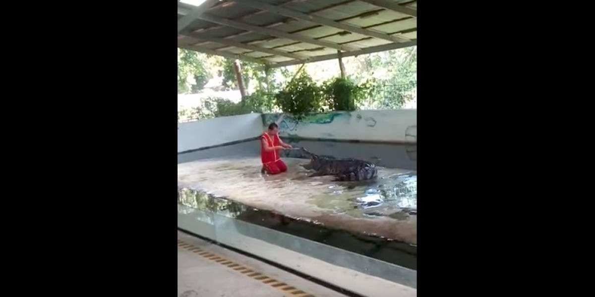 Adiestrador de cocodrilo pasa tremendo susto en pleno show