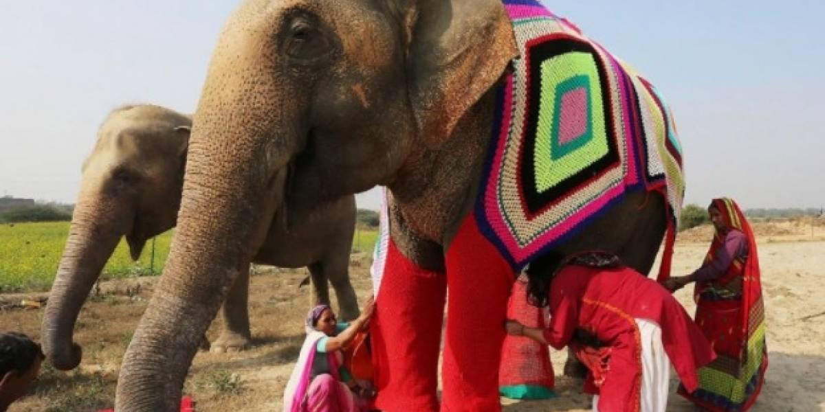 La original solución para proteger a los elefantes de la ola de frío que afecta a la India