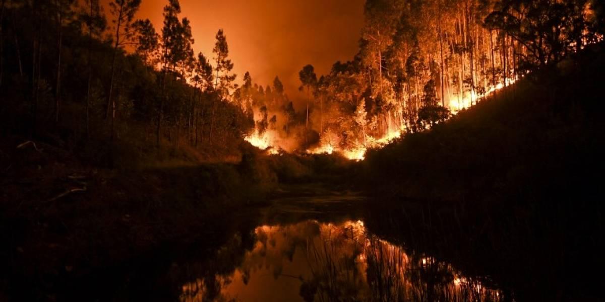 Risultati immagini per Más de 60 muertos y 62 heridos en un incendio forestal en Portugal