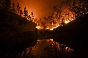 incendioportugal2.jpg