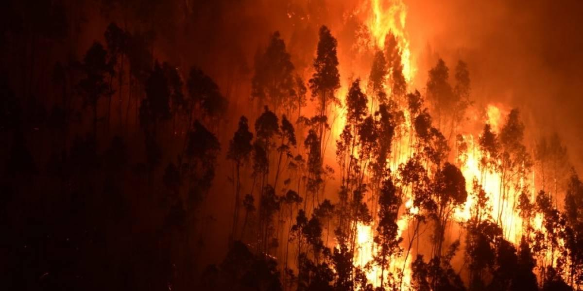 EN IMÁGENES. Tragedia por mortífero incendio en Portugal