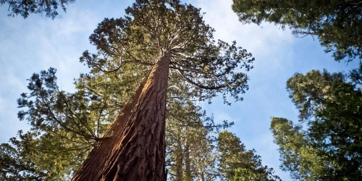 Autoridades cortan su árbol regalón y ejecuta la venganza más peculiar del mundo
