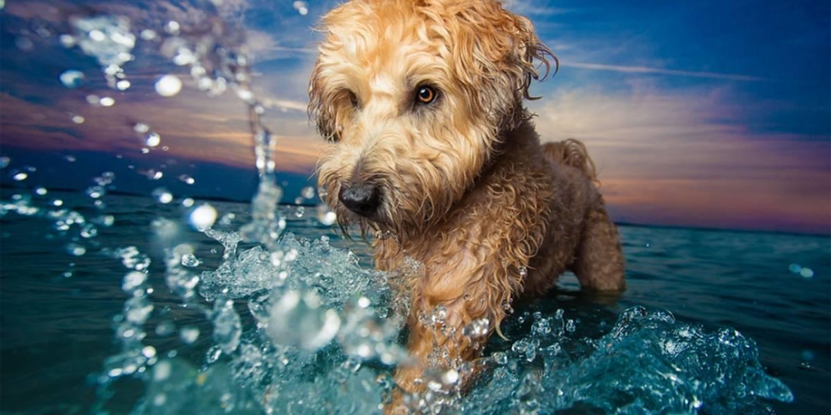 Conoce las diez fotografías de perros más lindas del mundo