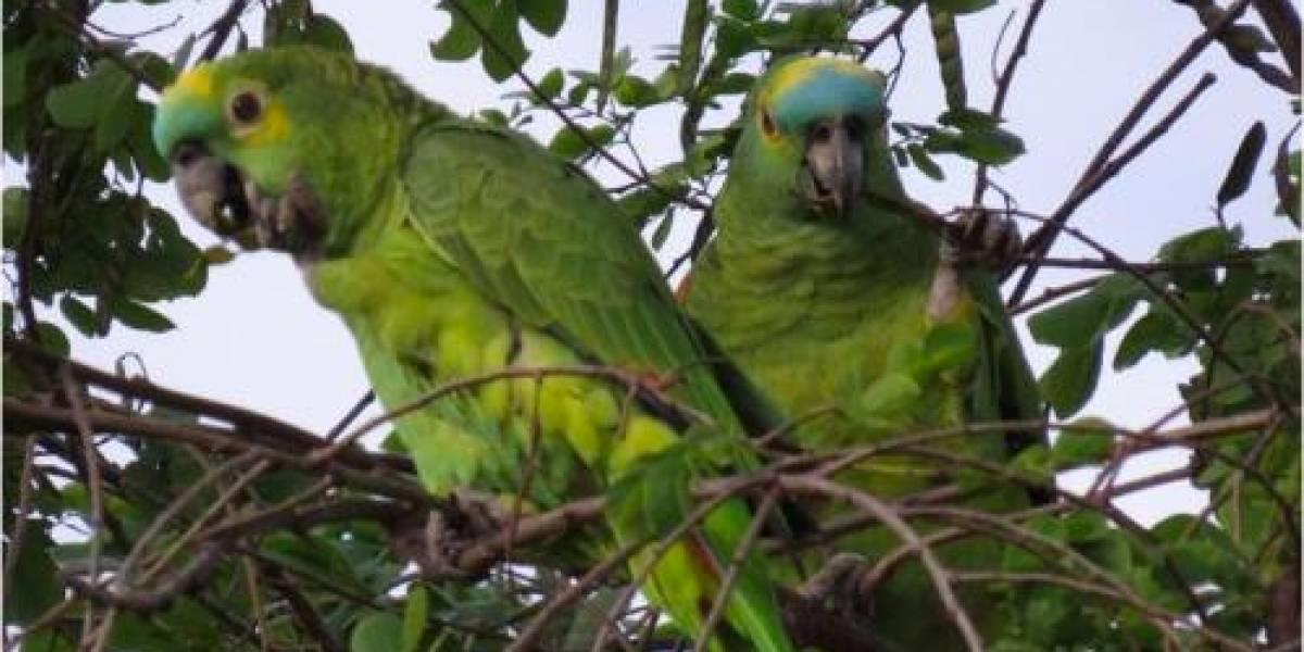 STJ garante a idosa posse de papagaio