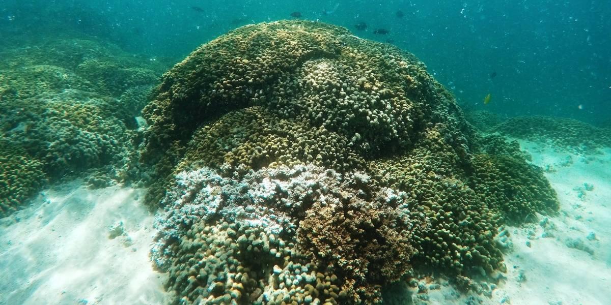 Se reduce el blanqueamiento masivo de corales