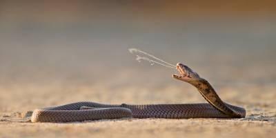 Una enorme cobra se metió en una casa — Terror animal