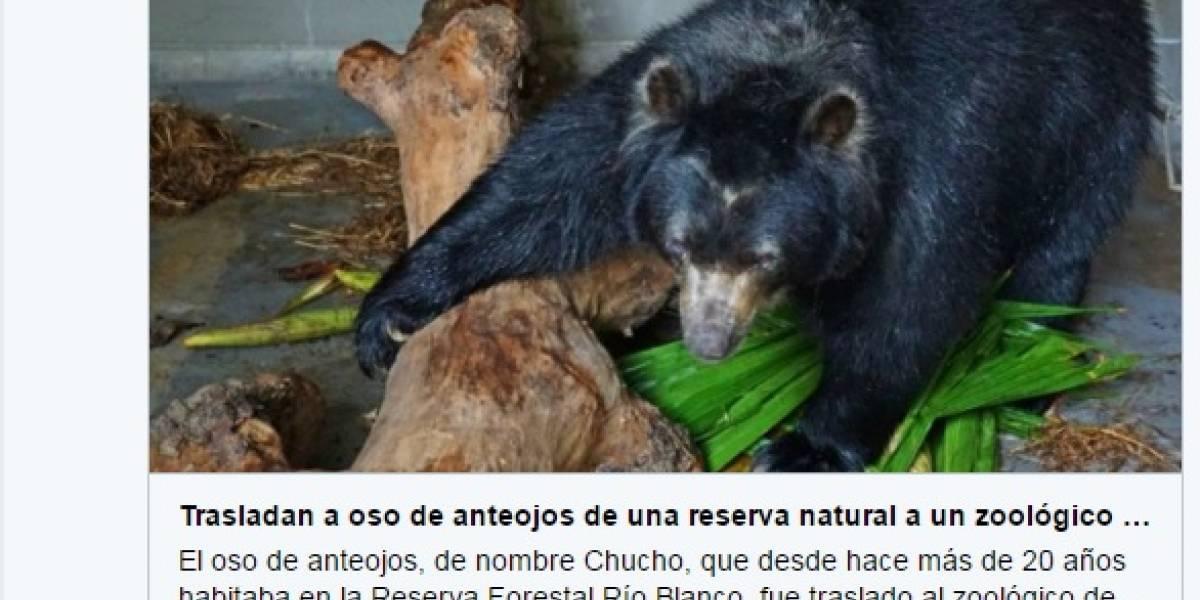 Denuncian traslado de oso de anteojos que vivía en clima frío al zoológico de Barranquilla