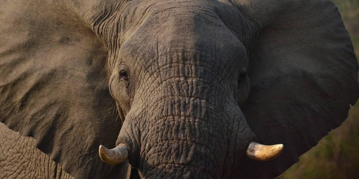 Elefante recién nacido causa sensación en zoológico de Moscú
