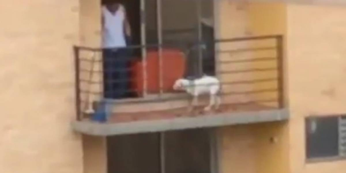Video: Luly Bossa denuncia a hombre que maltrata a un perro en apartamento al norte de Bogotá