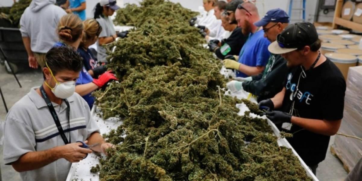 Cofepris presentará en 6 meses reglas para uso medicinal de la marihuana
