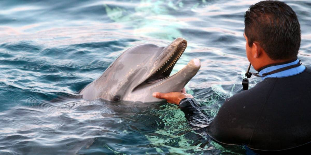 Delfines, industria en peligro de extinción
