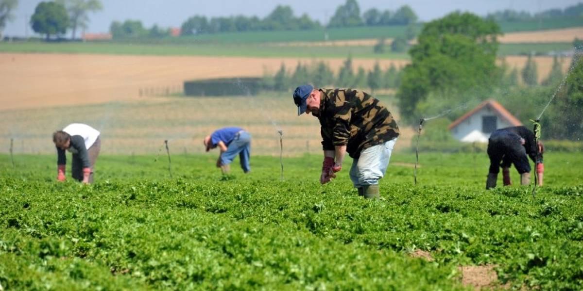 Ocde insta a crear políticas agrarias más enfocadas a la sostenibilidad y menos a los precios