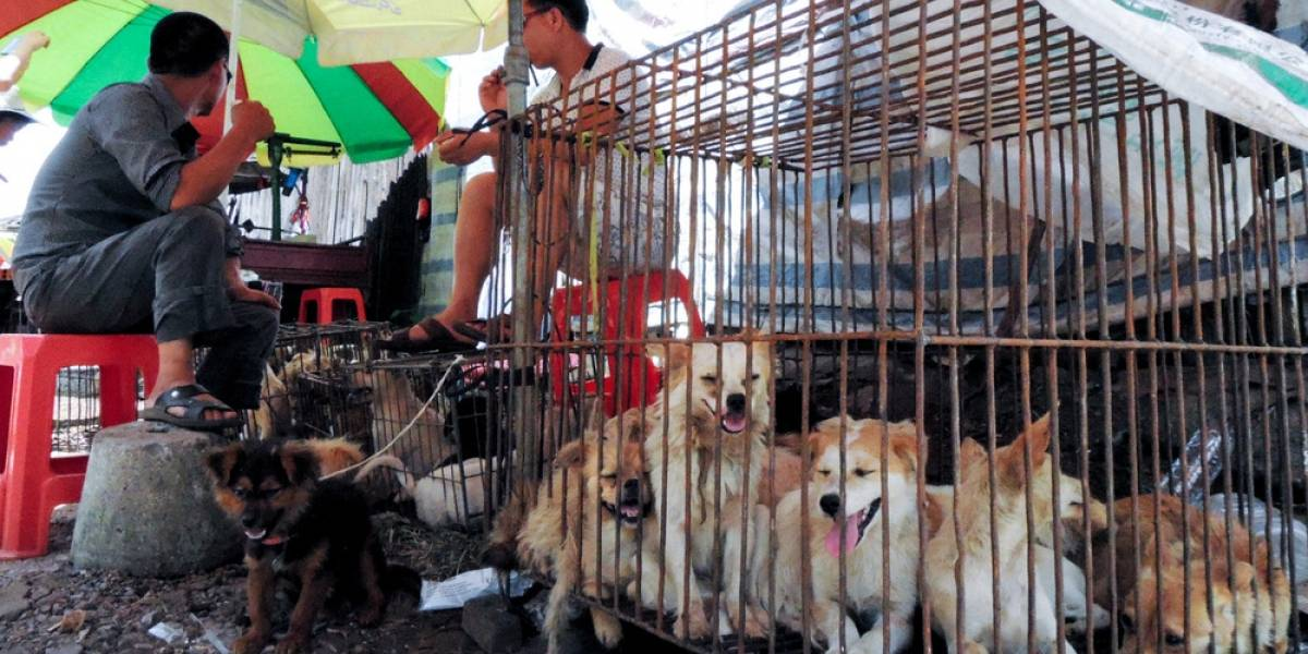 China festeja su tradicional y polémico festival de carne de perro