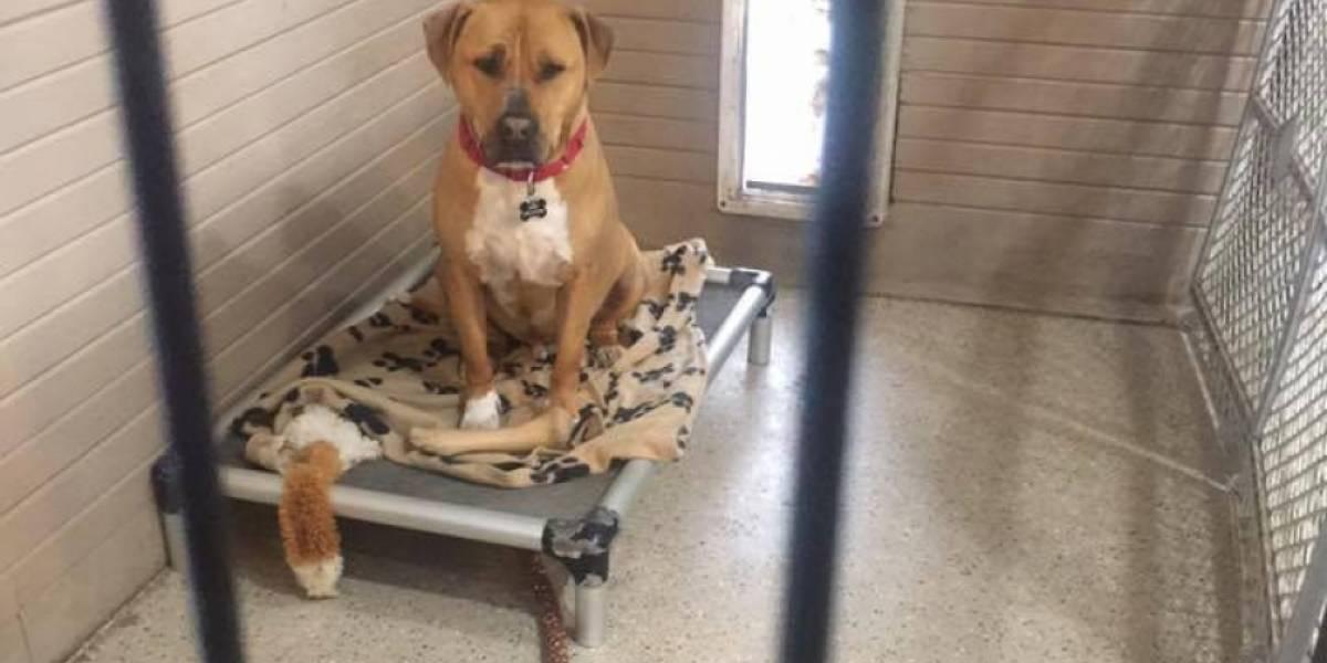 La foto que te romperá el corazón: la triste historia del perro que nadie quiere adoptar