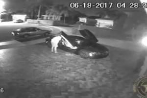 """Video muestra a la policía burlándose del delincuente """"más tonto del mundo"""""""