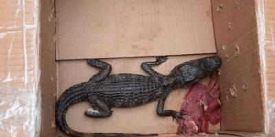 Hombre con cocodrilo en zona 10