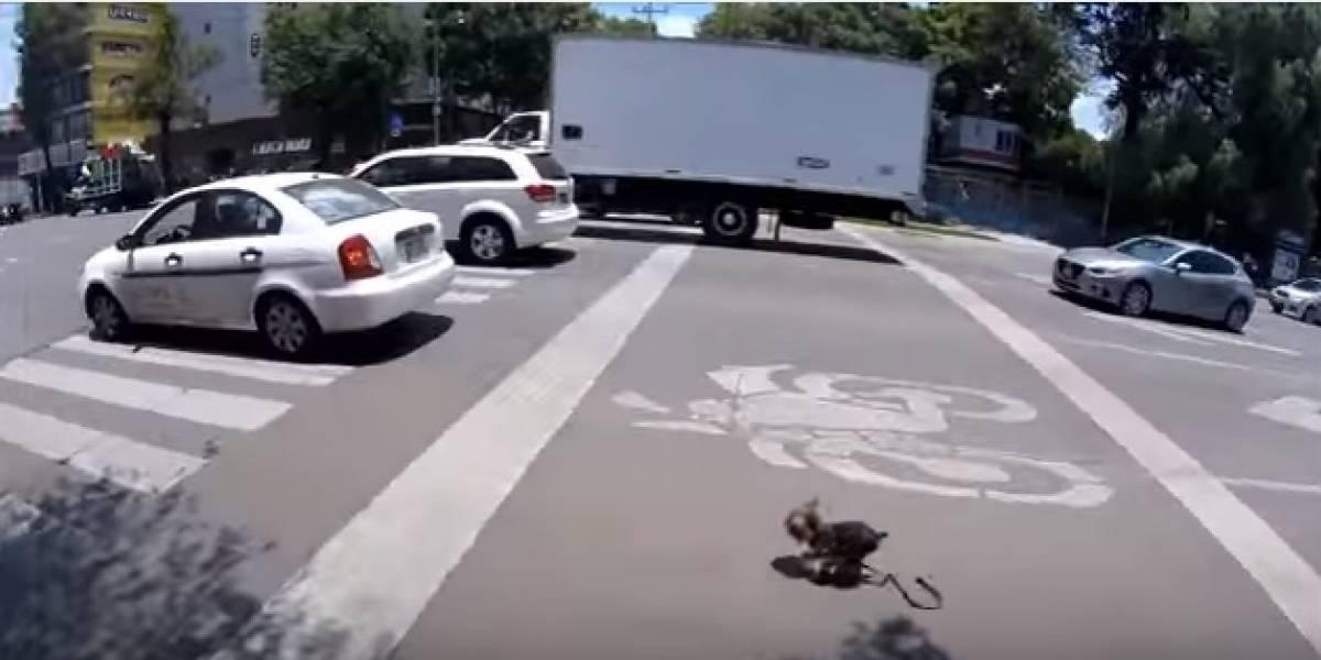 Dramática persecución de un ciclista para rescatar a un perrito que huía en medio del tráfico
