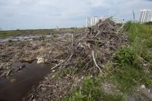 Tribunal ordena a Semarnat restaurar manglar de Tajamar en Cancún