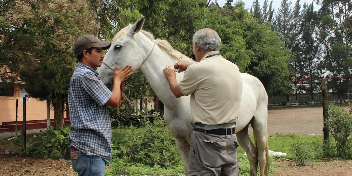Antigua Guatemala revoca licencias para carruajes jalados por caballos