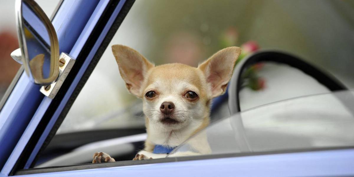 ¡Consiente a tu mascota! 8 objetos que tu mejor amigo necesita