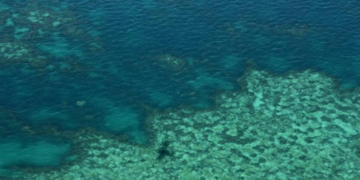 La Gran Barrera de Coral, estimada en 37.000 millones de euros