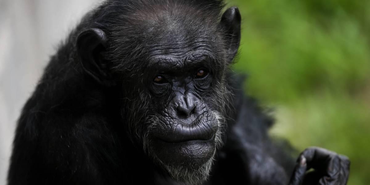 Arte del chimpancé de Michael Jackson se muestra en Miami