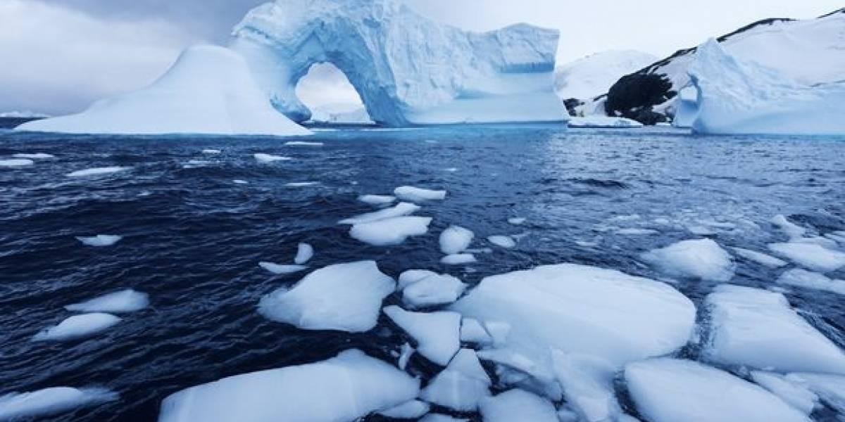 Cocaína y fármacos: científicos encuentran inusuales contaminantes en aguas de la Antártica
