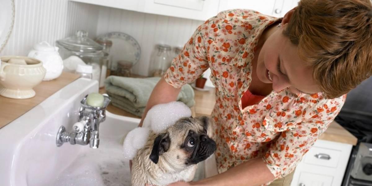 ¡No sufra más! Tips para quitar las pulgas en las mascotas