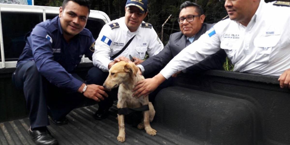VIDEO. Cierran restaurante tras denuncia de agresión contra activista que defendió a un perro