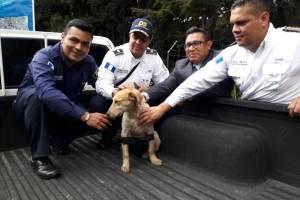 Rescate de perro en restaurante de carretera Interamericana