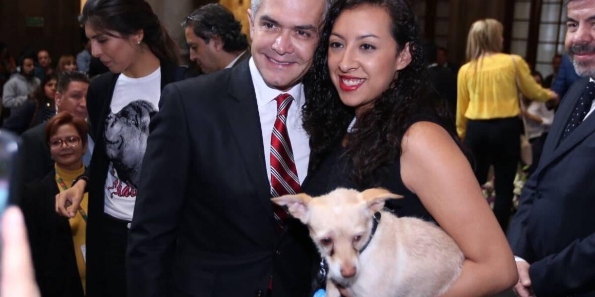 Se invertirán 10 mdp para crear Agencia de Atención Animal: Mancera