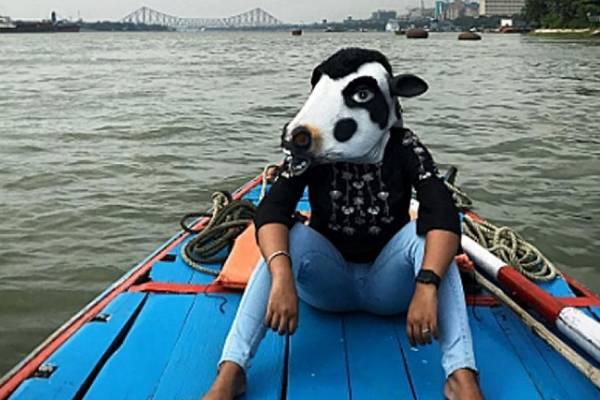 vacas India