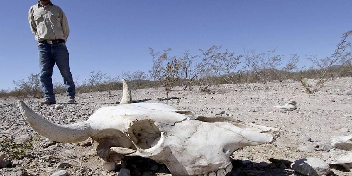 Cambio climático aumentaría hasta seis grados la temperatura en regiones de Jalisco