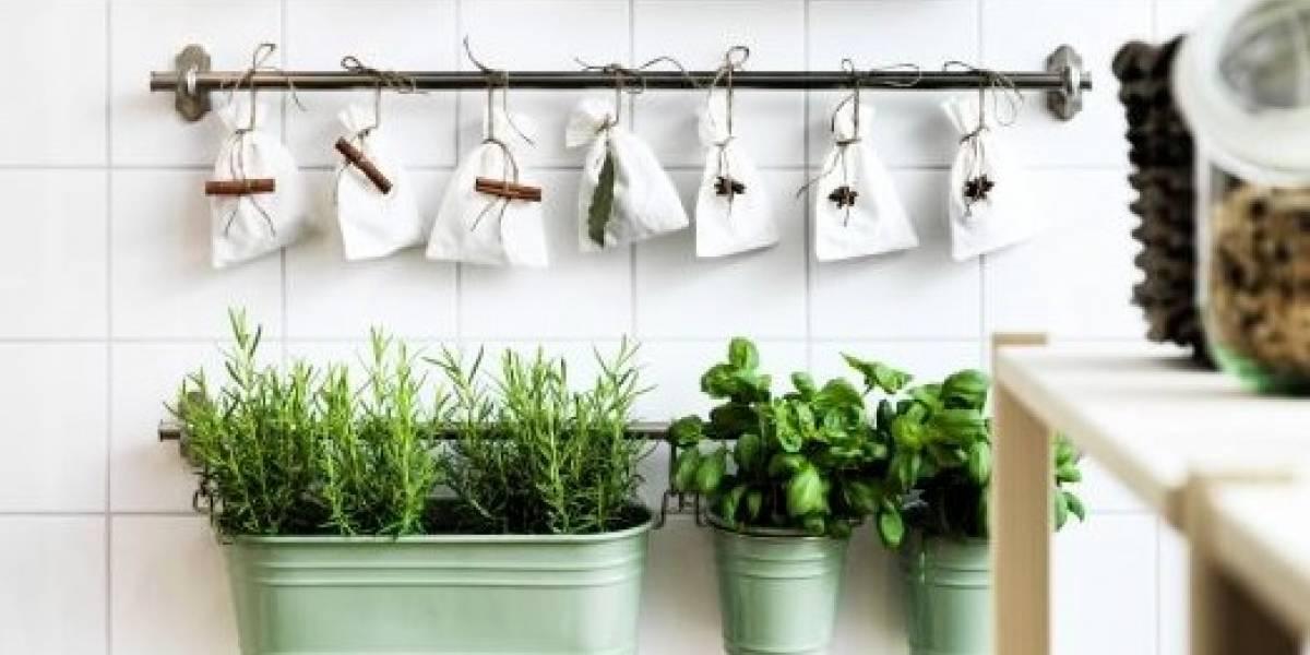 Horta em casa: veja como cuidar de 6 ervas