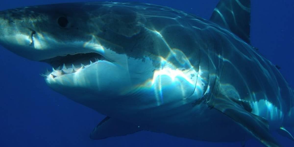 ¿Por qué aparecen tiburones muertos en las costas de Sudáfrica?