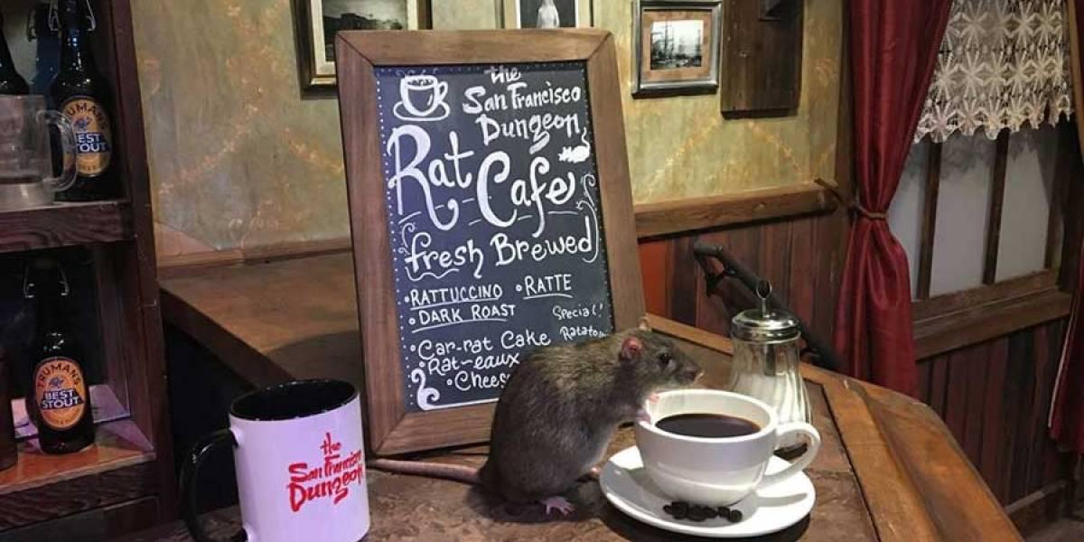Abren café temático con ratas en San Francisco