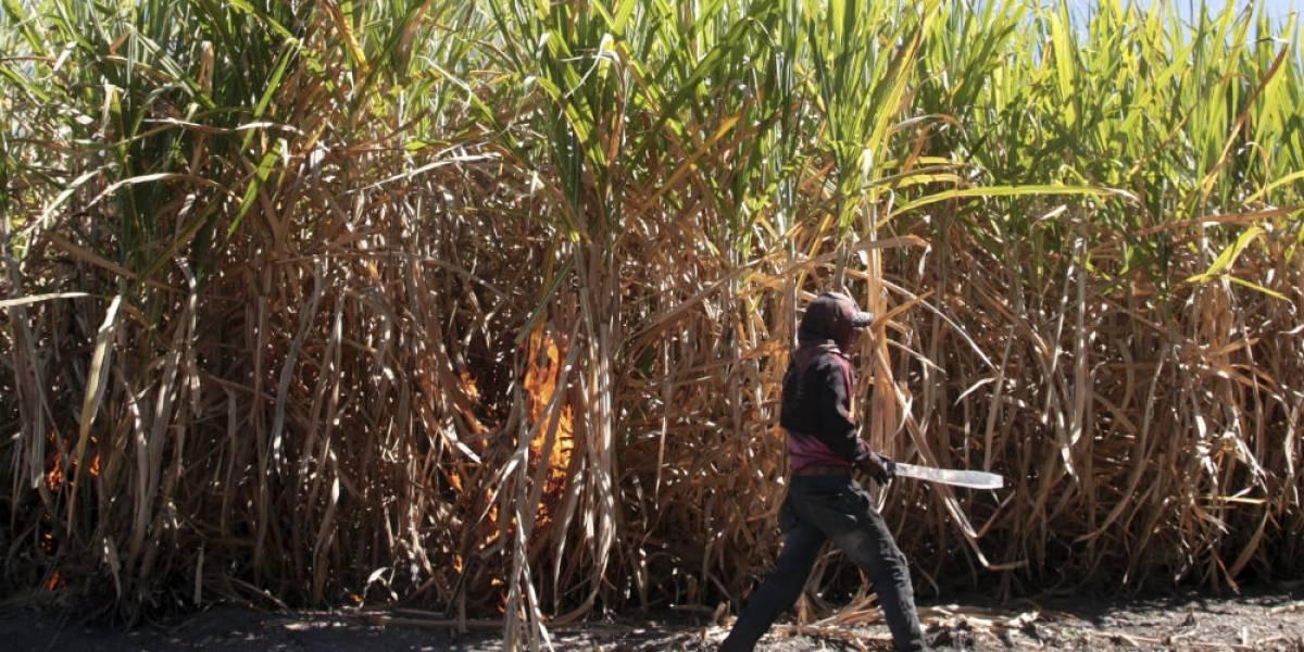México y EU firman nuevo acuerdo azucarero; eliminan cuotas por exportación