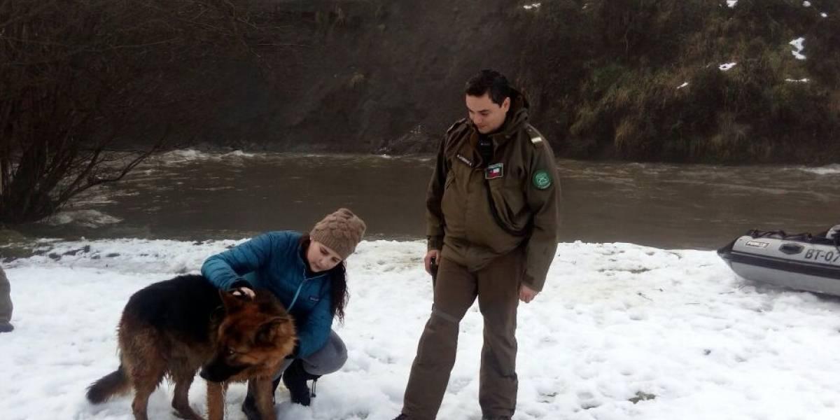 Aysén: Carabineros rescata a perro policial que quedó atrapado en río Simpson